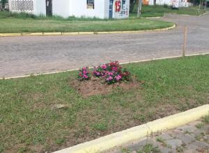 Primeira-dama de Dilermando de Aguiar dá continuidade ao plantio de flores no município